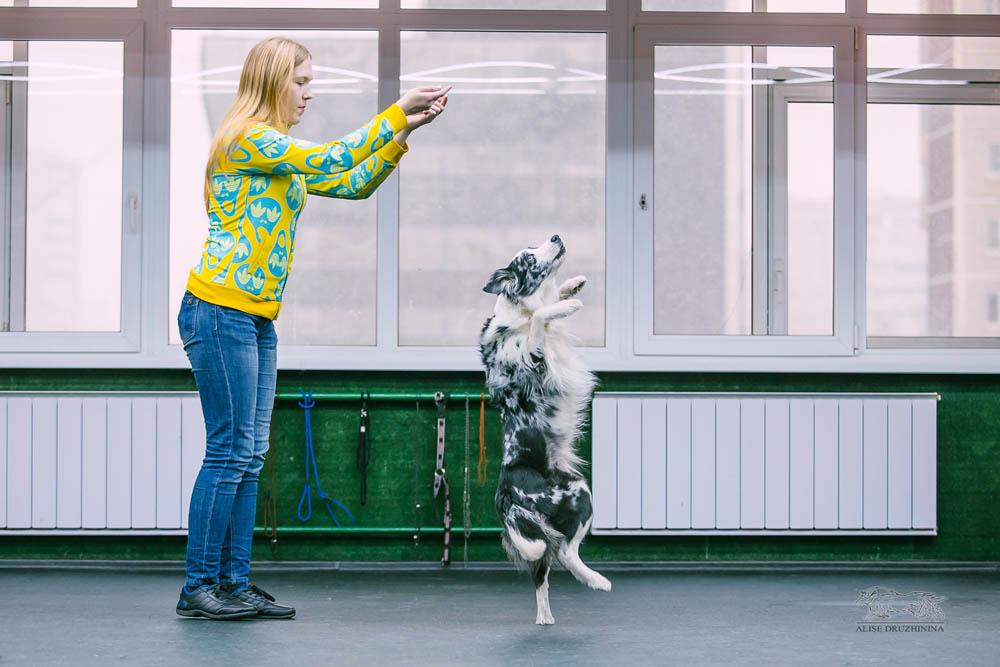 Трюковая дрессировка с Алиной Дюковой. Фото1
