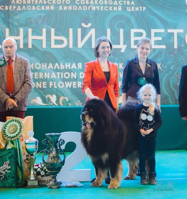 Поздравляем наших хендлеров! CACIB в Екатеринбурге