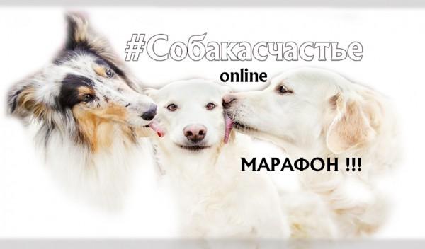 Первый онлайн марафон для владельцев собак!