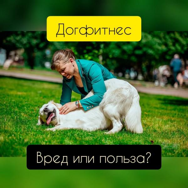 Елена ТИМКИНА: RIP по DOGFITNESS