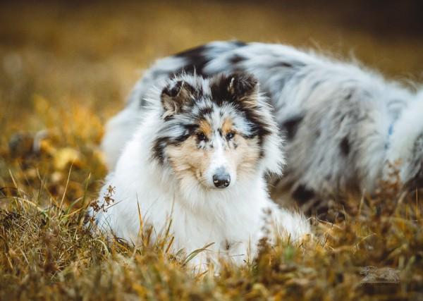 Список препаратов, опасных для MDR1 -/- собак