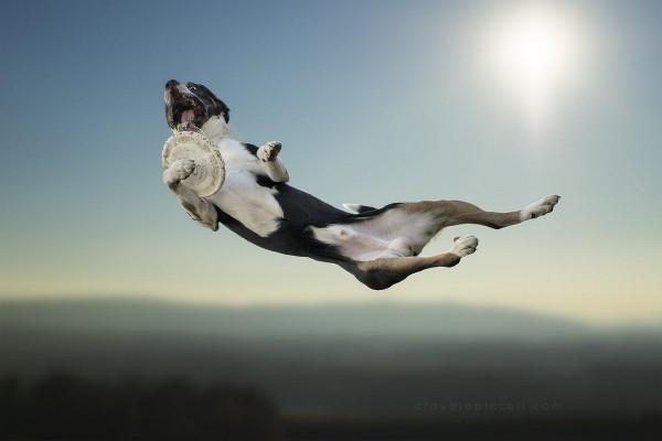 Первый вебинар 2020 - умеет ли ваша собака дышать?