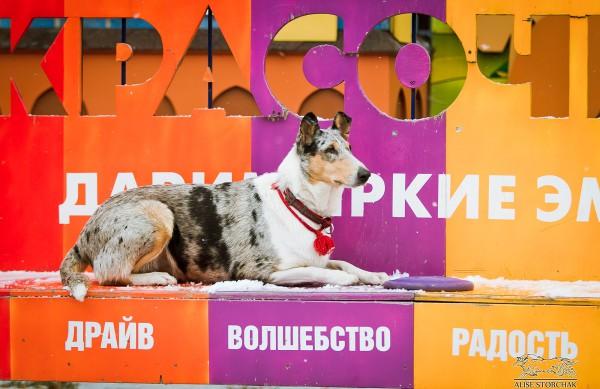 Мы открыли курсы по дрессировке собак в Екатеринбурге