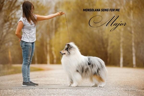 Экстерьерная фотосъемка собак фото