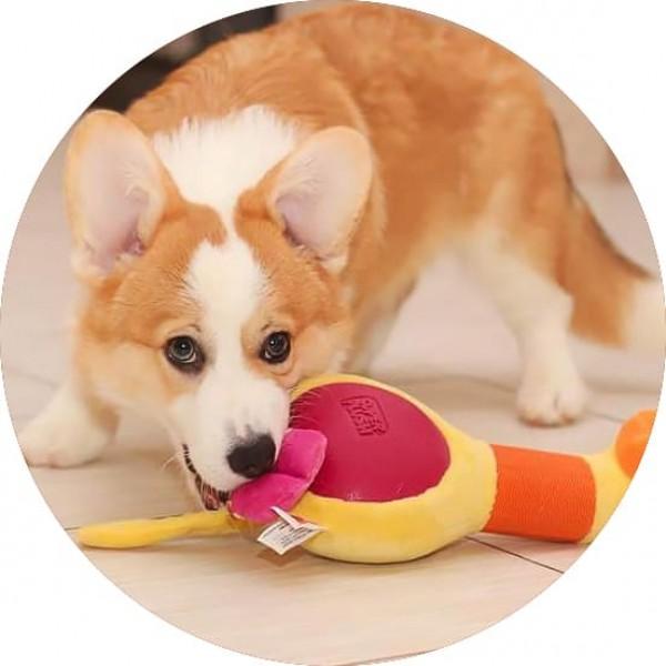 Как воспитать здоровую и счастливую собаку